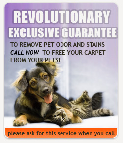 Houston-Carpet-Cleaning.Us